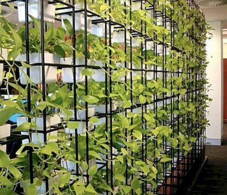 Planter Screens As Decor And Space Dividers0007