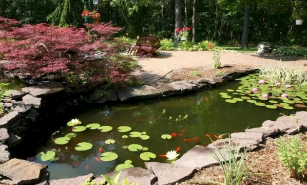 A Narrow Fish Pond With Water Lilies